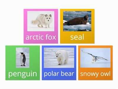 Maths artic animals
