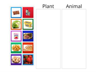Which foods come from animals/plants?