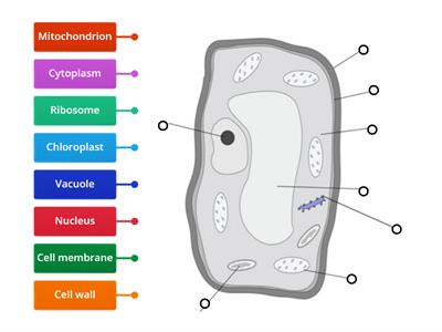 Animal and plant cell labeling - Teaching resources