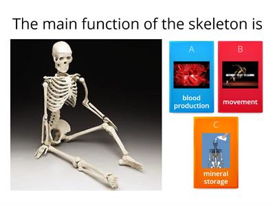 Skeleton,muscles and movement quiz