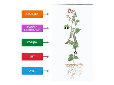 Cvjetnjače biljke NAJBOLJE LJEKOVITE