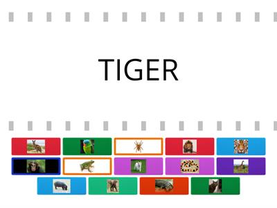Tiger 1  Animals