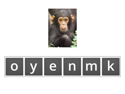 anagram 4 at the zoo