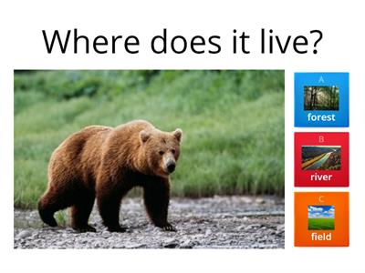 where does it live. Animals
