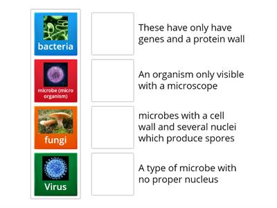 microbes definitions match up