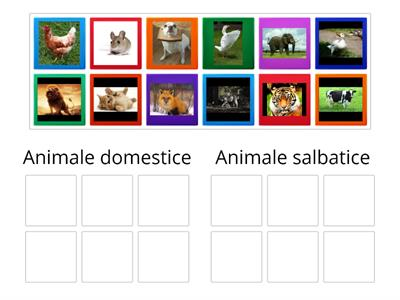 Sortare animale