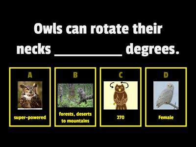 Copy of Facts about Owls - Set 2