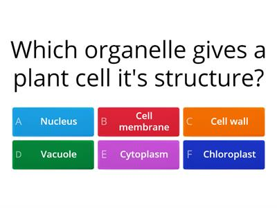 Cell Organelles (quiz)
