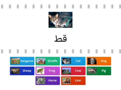 Animals in Arabic - حيوان