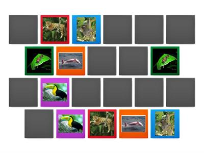 Match the Amazonian animals!