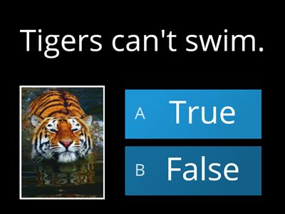 What do you know about tigers? Do the quiz and if you want to learn more check here: https://www.sciencekids.co.nz