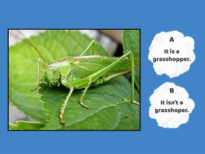 Insects and outdoor items - It is..., It isn't...