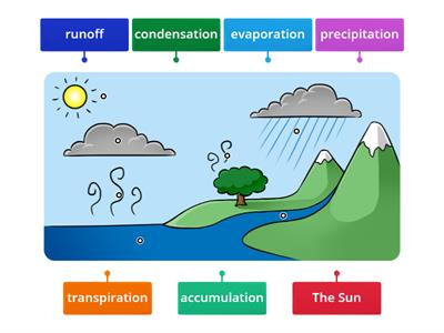 Water Cycle- Label Illustration