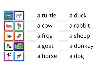 Animals. Vocabulary