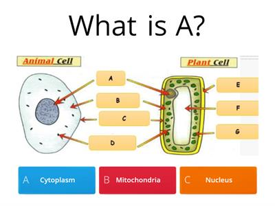 Cells ks3 test teaching resources labelling cells quiz ccuart Gallery