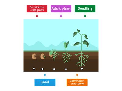 Copy of  Plant Life Cycle