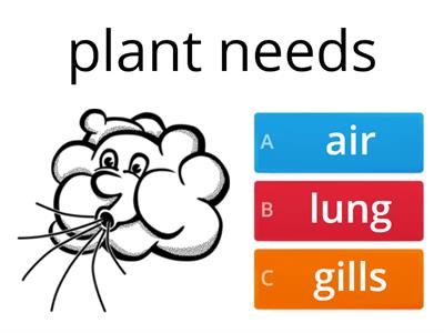 Copy of  WHAT A PLANT NEEDS
