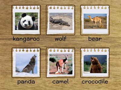 AS2 Unit 1.1 Wild animals