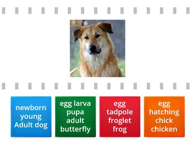 find the match  Animals  Life Cycle 1