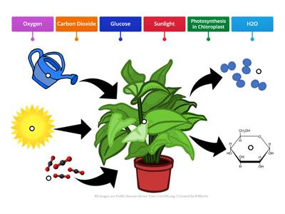 New Photosynthesis Diagram