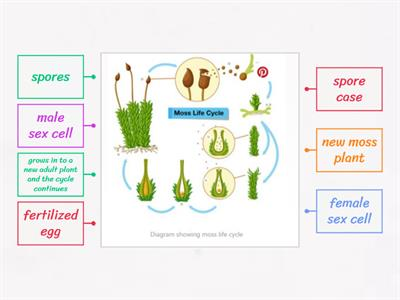 moss life cycle-label the digram
