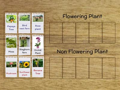 Flowering Plant and Non Flowering Plant