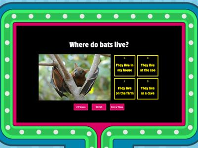 Group E Bats Day And Night Final Quiz