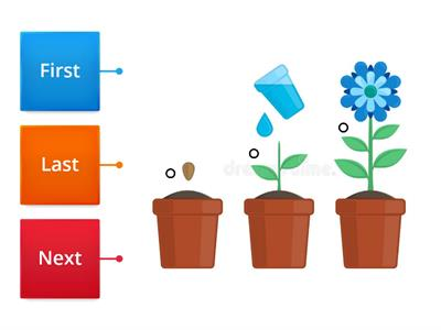 Label the sequence of growing a plant.