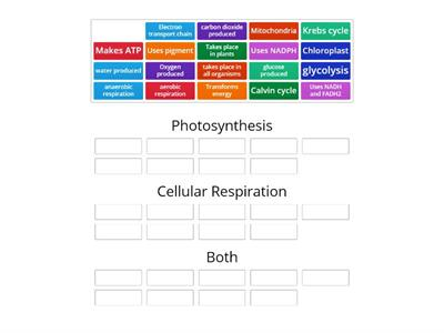 photo/cell resp compare/contrast