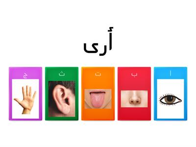 The verbs for the five senses