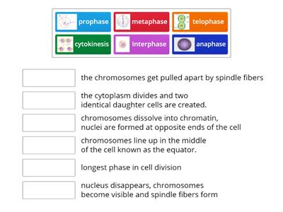 cell cycle with pictures