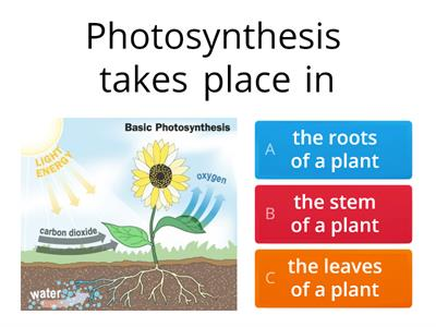 Photosynthesis teaching resources photosynthesis quiz ccuart Images