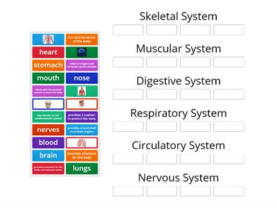 Single words Human Body Systems G2