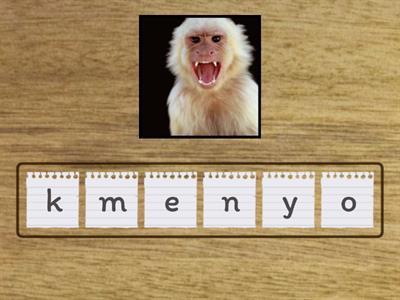 Animals anagram