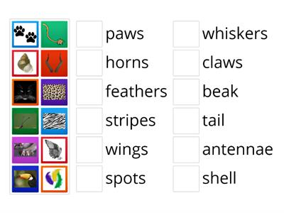 Animals' body parts (Pop 3 - unit 3)
