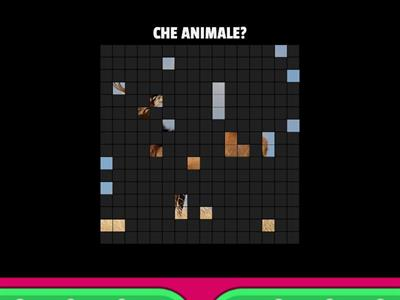 Che animale è?