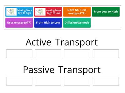 Active vs. Passive Transport Sort