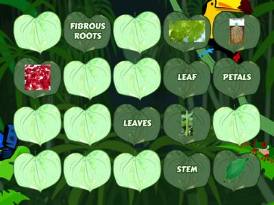 PARTS OF THE PLANTS (Memory card game)