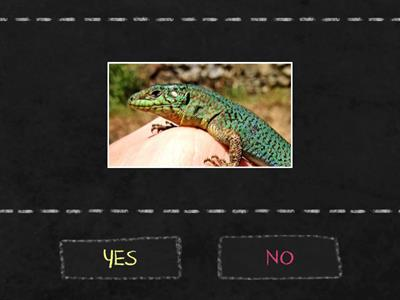 Is it a REPTILE?