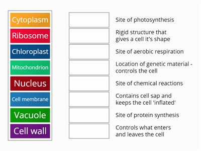 Polesworth cell structure mix and match