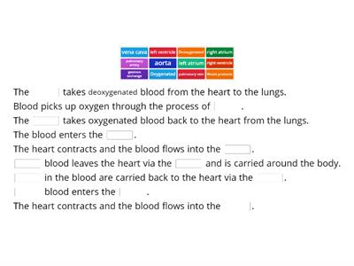 Cardiovascular system - Path of blood