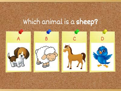 Animal Shelter Vocabulary