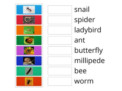 Insects (minibeasts)