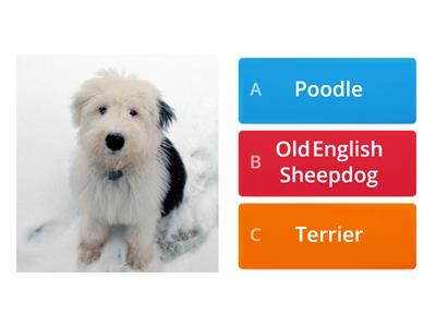Puppy Parade Quiz!
