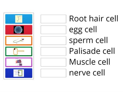 Specialised cells matching game