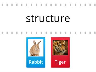Rabbit vs Tiger ture/tion 2 syllable words