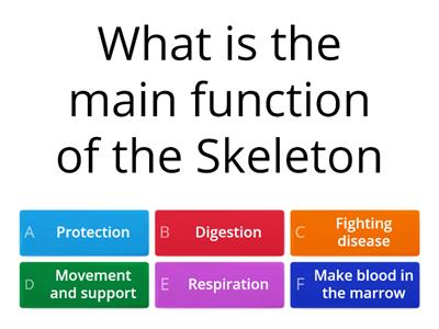 The Skeleton and the Muscles