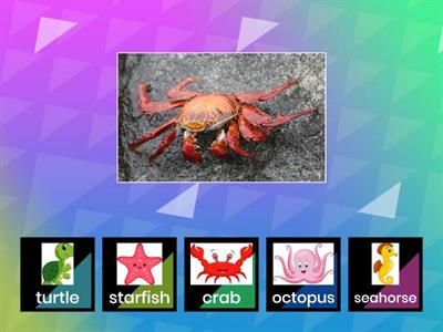 Sea animals sorting (4-7)
