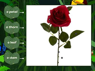 Amazing Plants - Rose's parts