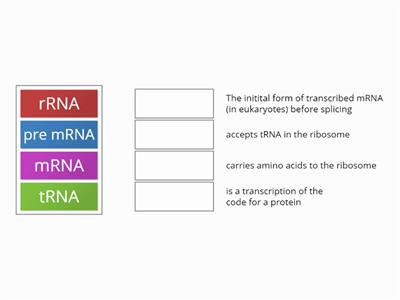 RNA types match up